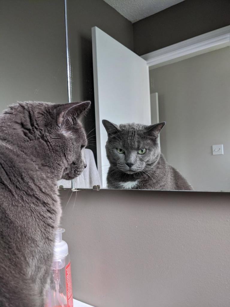 Я выбежала на улицу и увидела двух одинаковых котов. И я не могла понять, который из них мой