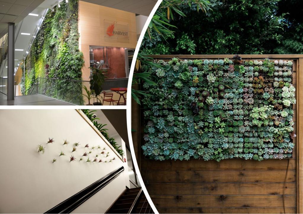 Зелень увеличивает размер, текстуру и придает яркий визуальный эффект: способы оживить стены дома