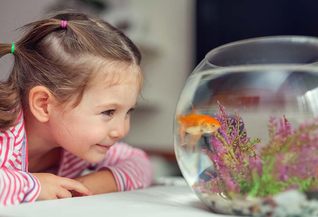 Рыбок выбирают люди, которые боятся обязательств, а кошек   пофигисты: что животное может рассказать о характере своего хозяина