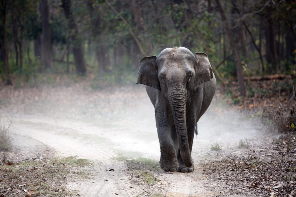 Защитники дикой природы в Индии волнуются: из-за самоизоляции у них нет возможностей помогать диким животным