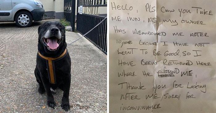 «Я не научился быть хорошим»: люди нашли на улице брошенного лабрадора с запиской