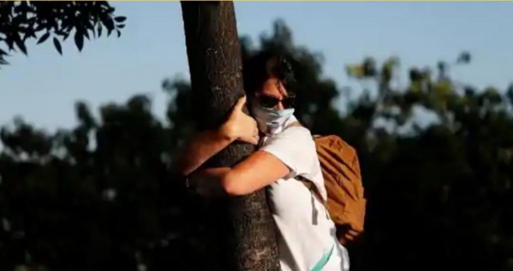 Сделайте вдох и обнимите дерево: израильтяне обнимают деревья, чтобы заполнить пустоту