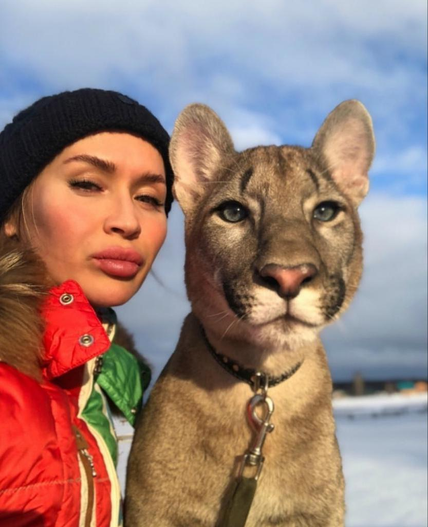 Ласковая и нежная пума: как девушке удалось одомашнить дикое животное