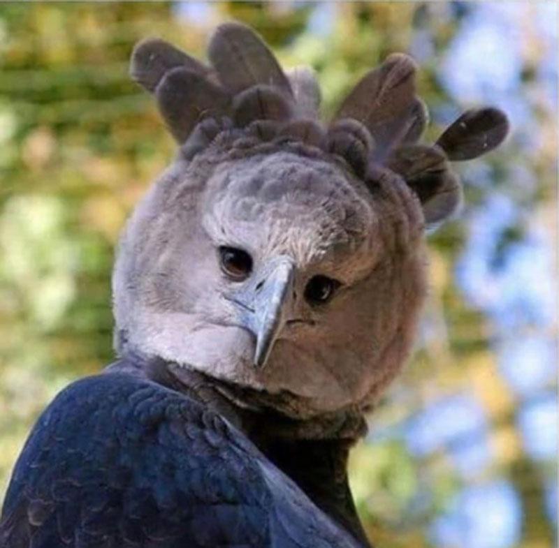 Животные и птицы, от внешности которых становится не по себе (фото)