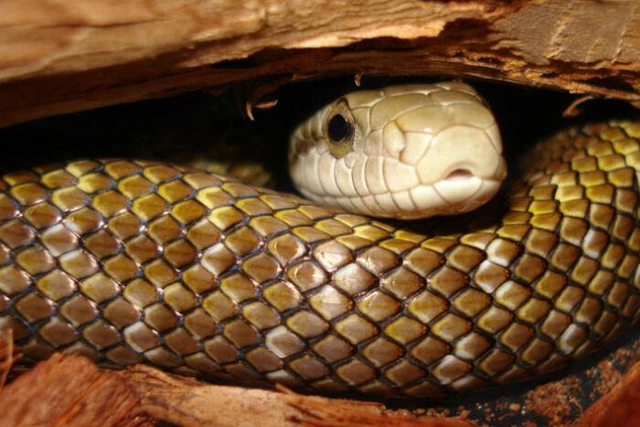 Мужчина купил эндоскоп и показал, как выглядит змеиная нора изнутри (видео)