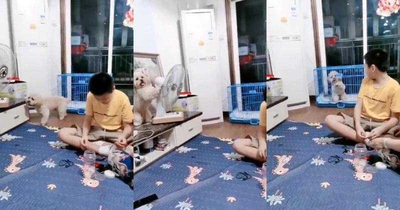 Смышленой собачке надоела жара, и она решила повернуть вентилятор в свою сторону (видео)