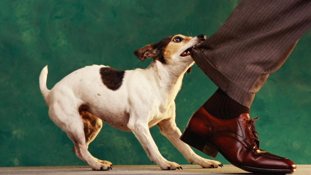 Что делать, если собака реагирует на гостей агрессивно: правильное приветствие и другие советы