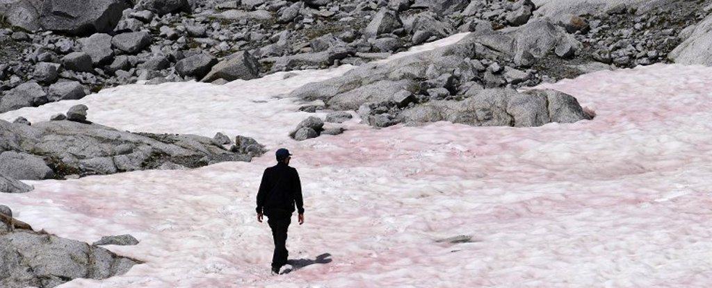 В Альпах обнаружили розовый снег: к каким последствиям это приведет
