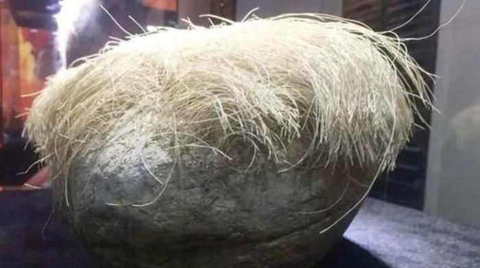 Гуляя по полю, фермер нашел «волосатый» камень и принес домой. Увидев, что «волосы» еще и растут, он вызвал экспертов