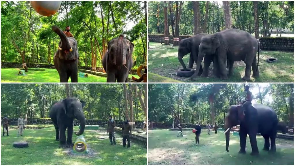 «Качалка» для тяжеловесов: в Индии мужчина построил спортзал для слонов, чтобы животные не застаивались на карантине (видео)