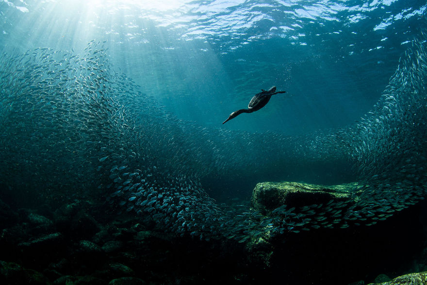 Снимки природы, ставшие победителями в конкурсе Audubon Photography Awards 2020 года
