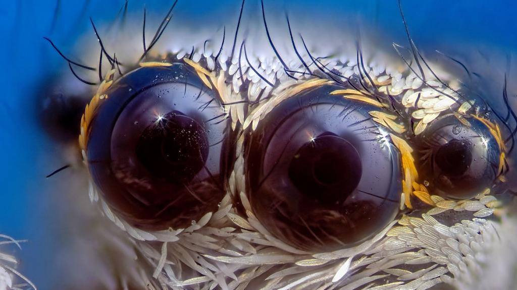 Личинка комара, джинсовая ткань под микроскопом, бриллиант: выбраны лучшие научные фото в конкурсе