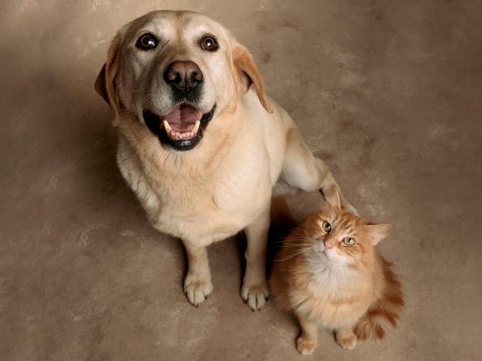 Как познакомить новую собаку с кошкой? Потребуется всего неделя