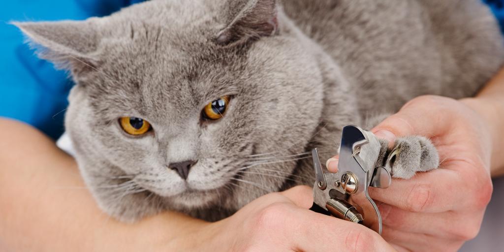 Простой лайфхак. Парень нашел гениальный способ стричь когти коту