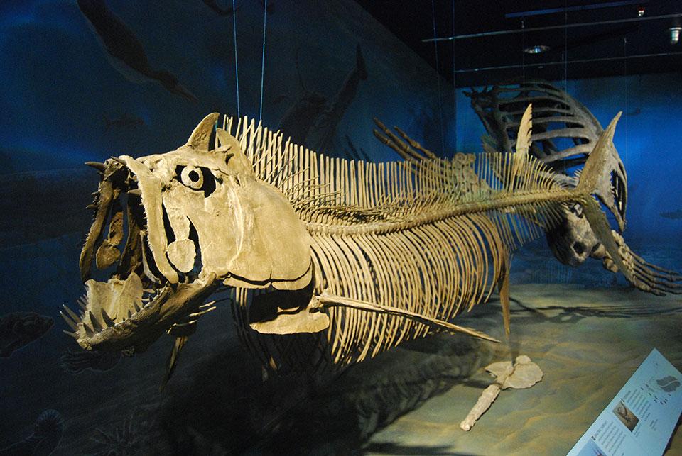 В Аргентине обнаружен окаменелый скелет гигантской рыбы, которая жила во времена динозавров: ее возраст около 70 миллионов лет, а длина более 6 метров