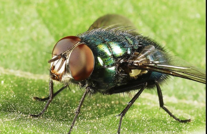 Носок с укропом: 2 проверенных домашних средства от мух, клещей, комаров. Обходят десятой дорогой