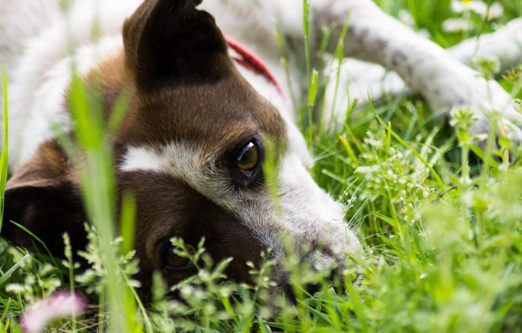 Почему говорят собачьи дни лета: в этом нет ничего общего с четырехлапыми друзьями