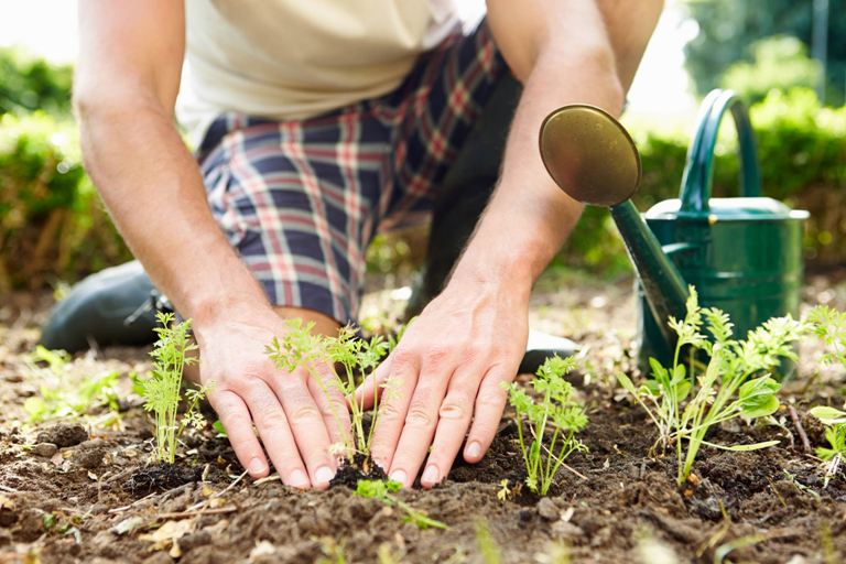 Посевной календарь на июль: в какие дни лучше заниматься огородом, чтобы был богатый урожай