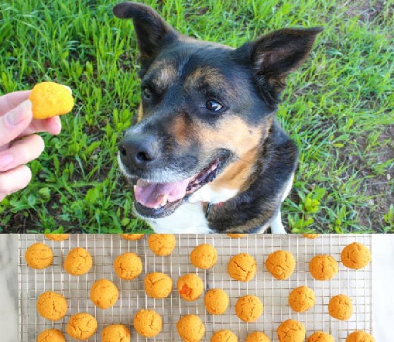 Собачья радость: четвероногого питомца балую самодельными печеньками со сладким картофелем