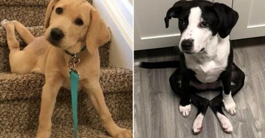 15 прикольных собак, которые отказываются сидеть как нормальные животные, но им норм