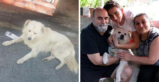 Семья встретила в другом городе своего пропавшего пса. От видео их встречи зашкалят все мимиметры