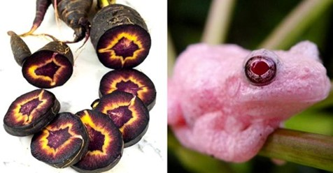 18 по-настоящему диковинных созданий от матушки-природы, от которых захватывает дух