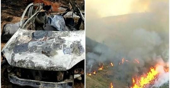 Бразильский пенсионер сжег 700 гектаров заповедного леса и погубил сотни животных из-за страховой аферы