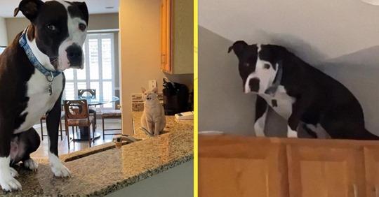 Спасенный пес отказывается верить в то, что он — собака!