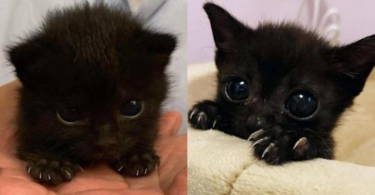 9 милейших котиков, которые напоминают нам о том, что они – хищники
