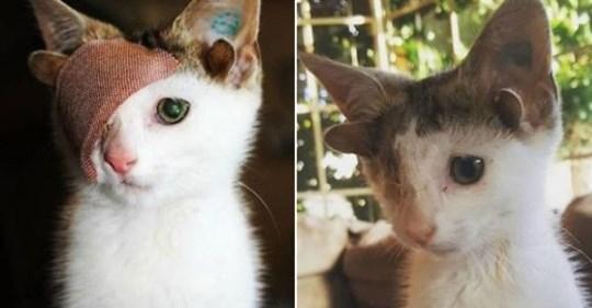 Этот спасённый котёнок с четырьмя ушами и одним глазом наконец-то перестал страдать и нашёл дом
