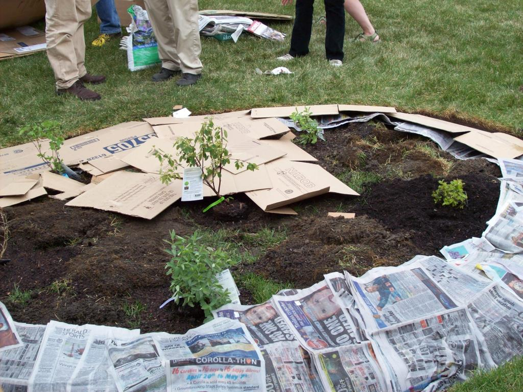 Война с сорняками: бумажная мульча и другие эффективные способы без химикатов