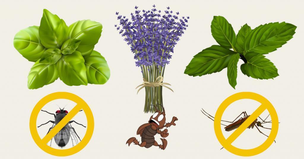 Уксус, базилик, герань: как еще можно избавиться от вредных мух