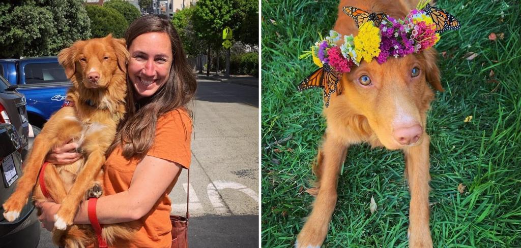 Пес по кличке Мило стал звездой соцсетей из за того, что дружит со всеми бабочками, которые живут в его саду
