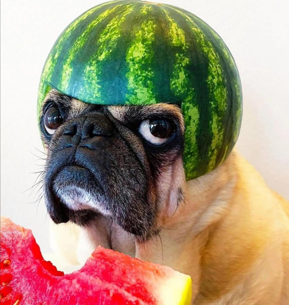 Арбузный челлендж: скучающие владельцы собак создают для своих животных забавные шлемы из корок и делают веселые фото