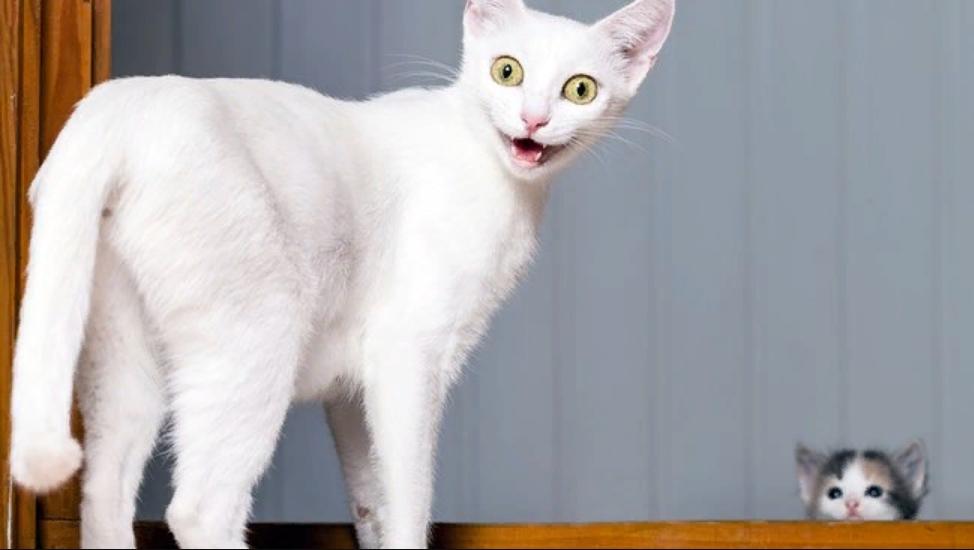 Какую услугу Исаак Ньютон оказал кошкам? В этой викторине для любителей котиков еще не было абсолютного победителя, верно ответившего на все 10 вопросов. Возможно, им станете вы