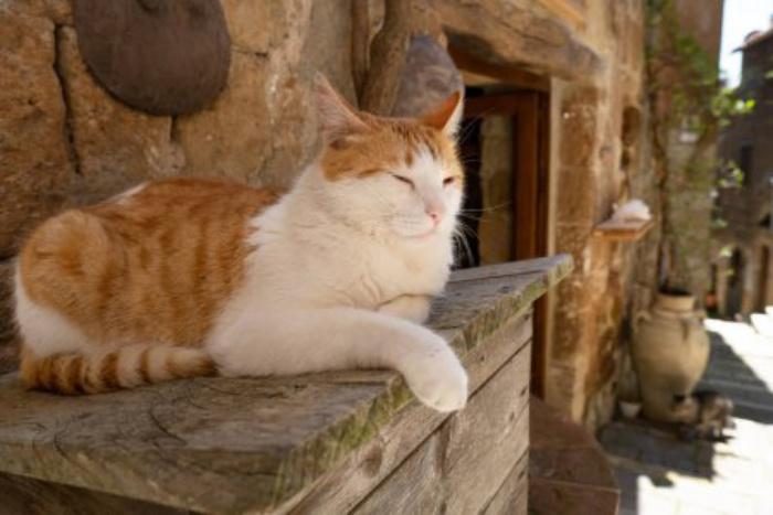 В отличие от других животных, кошки не любят трудиться ради пищи