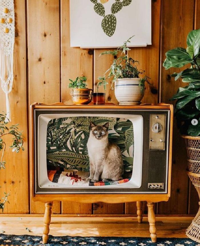 Домики для кошек из старых телевизоров стали популярны благодаря соцсетям