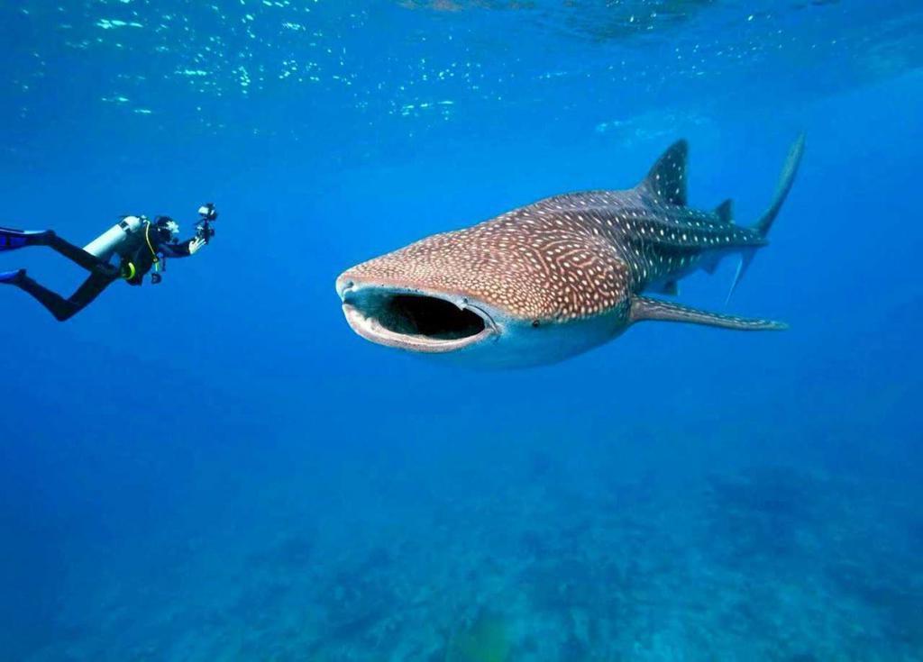 Бамбуковые акулы ходят, китовые могут выносить до 300 детенышейодновременно: захватывающие открытия об этих больших рыбах за последнее десятилетие