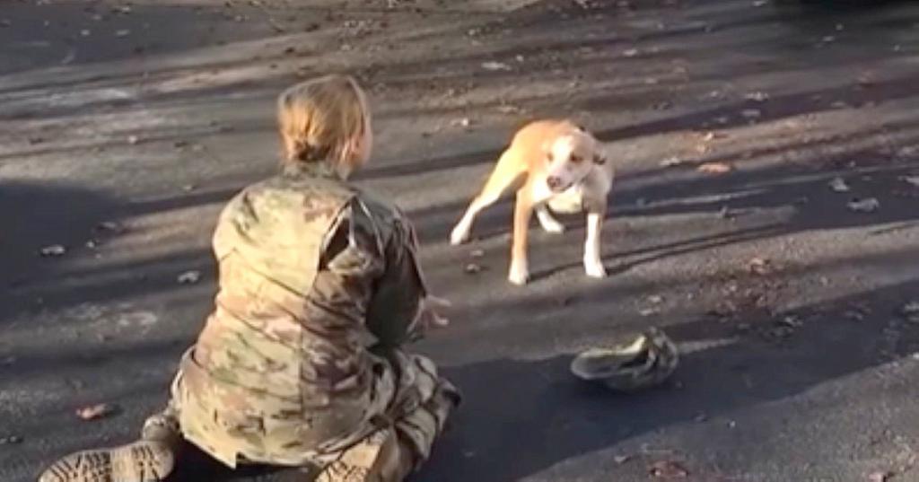 Девушка 8 месяцев была на службе в армии и все это время не видела свою любимую собаку. Но реакция питомца была необычной
