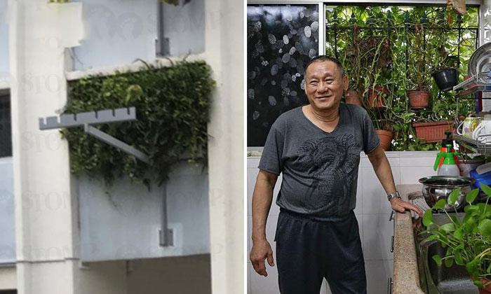 Квартира-джунгли: владелец не намерен подстригать растения, хотя его неоднократно просили сделать это