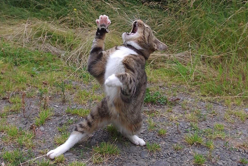 Танцующие кошки и собаки за рулем автомобиля: гордые хозяева представили снимки своих питомцев на конкурс самой смешной фотографии из мира животных