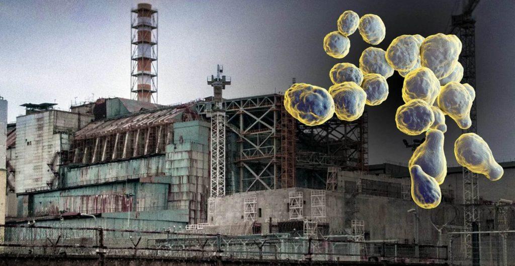 Плесень из Чернобыля защитит космонавтов от радиации? Смелая теория может изменить космонавтику