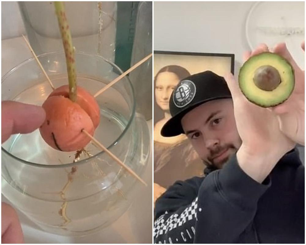 Мужчина посадил косточку от авокадо: люди увидели, что из нее выросло, и захотели себе такое же растение