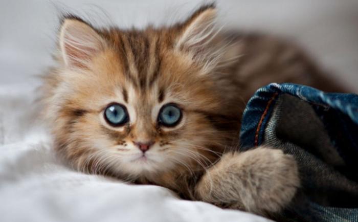 Тихий, медлительный, стройный. Кошачий идеал хозяина: проверьте, насколько вы нравитесь своему питомцу