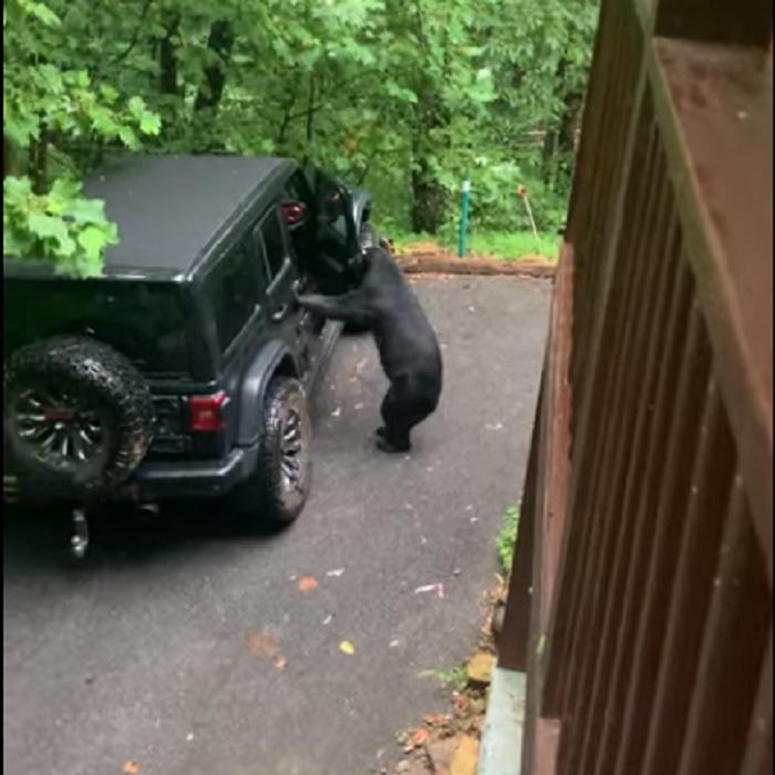 Мужчина одной фразой заставил медведя закрыть дверь машины: весь секрет   в тоне его голоса (видео)
