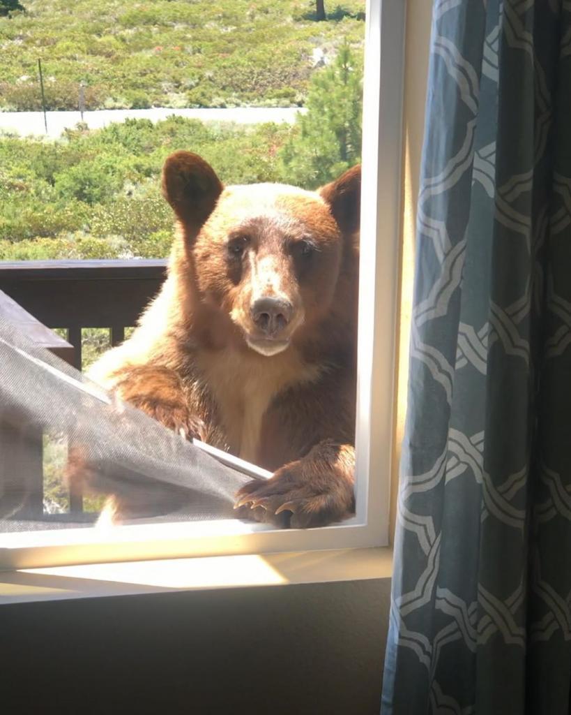 Дикий медведь настойчиво пытается зайти в дом к мужчине: неожиданного гостя удается снять на видео
