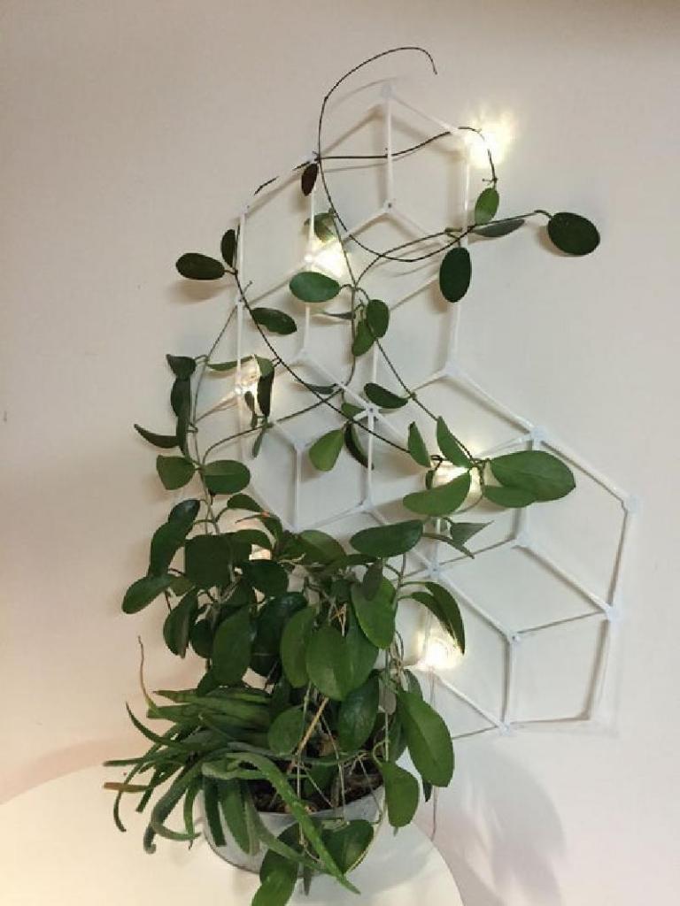 Комнатный плющ начал разрастаться, поэтому я смастерила специальную сетку, которая одновременно украшает стену и позволяет цветку расти вверх