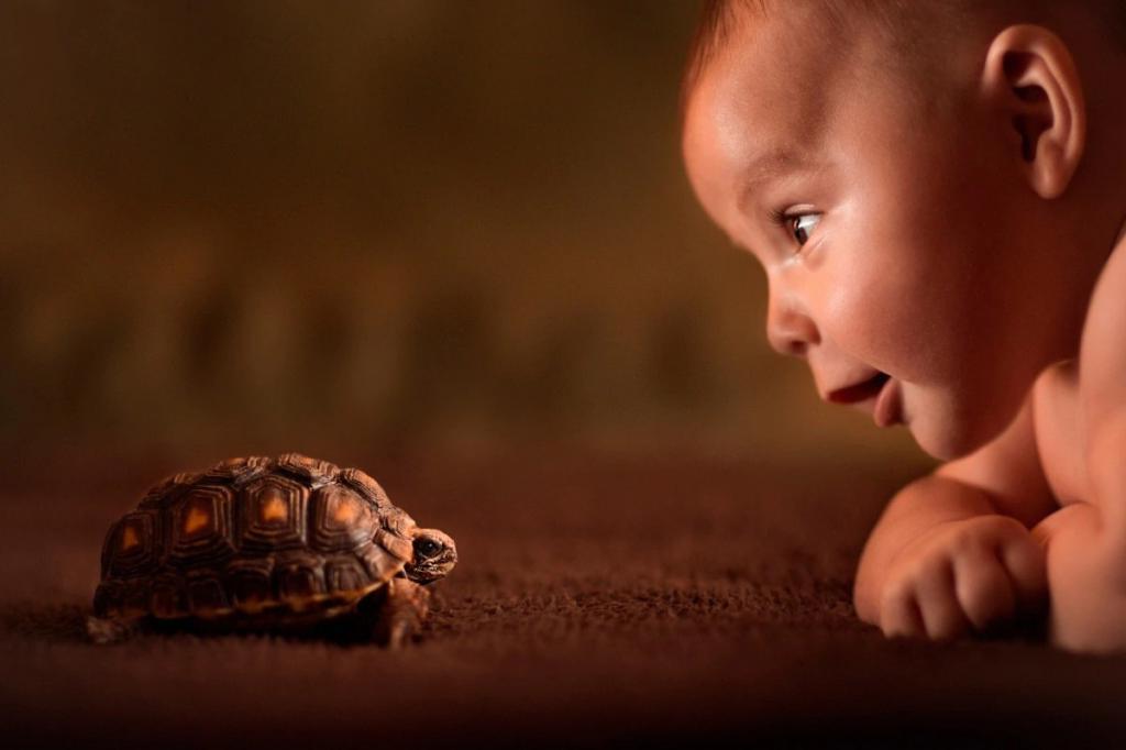 У людей и черепах общие предки: ученые провели любопытный эксперимент