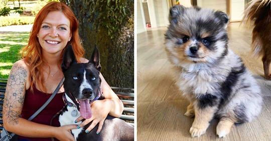 12 собак-метисов, чья шикарность — заслуга родителей разных пород