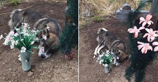 Пес из Кривого Рога долгих 3 года провел на могиле хозяина